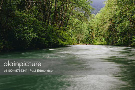 Dosewallips River and lush, green temperate rainforest, Olympic NP