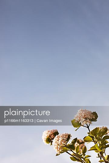 p1166m1163313 von Cavan Images