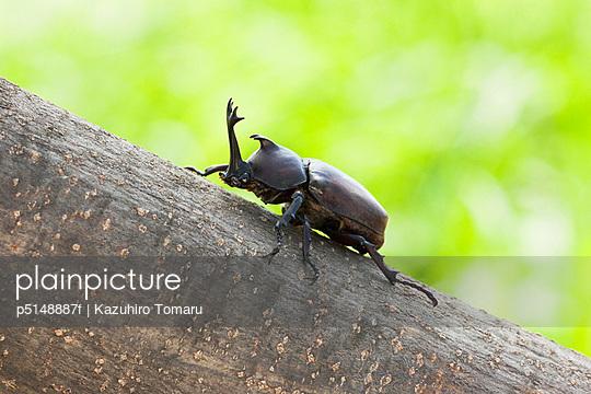 Beetle One Animal Climbing Tree Trunk Close-up