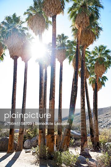 Palm Springs - p756m1158709 von Bénédicte Lassalle