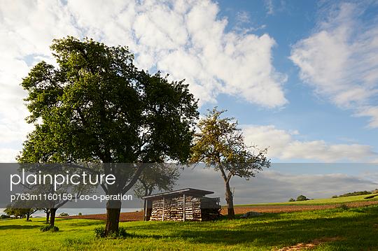 Obstbaumwiese mit Holzstapel - p763m1160159 von co-o-peration