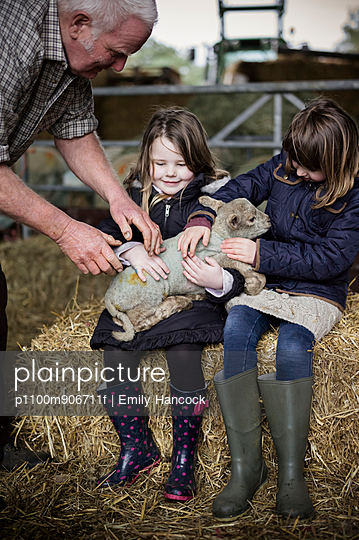 Children and new-born lambs in a lambing shed.