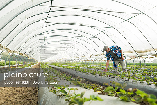 Farmer looking at plants in a greenhouse