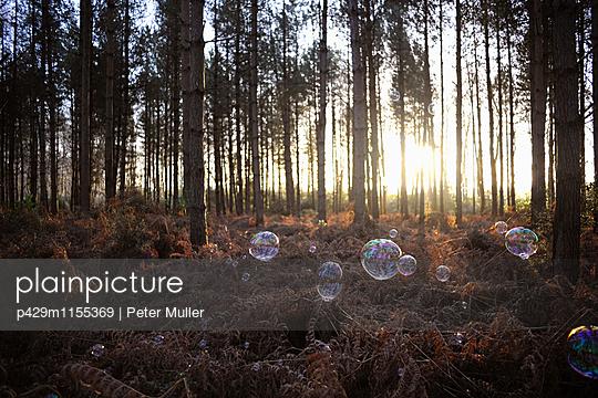 p429m1155369 von Peter Muller