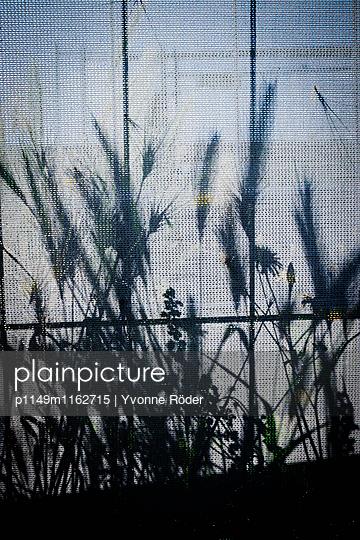 Bauzaun mit Pflanzenschatten - p1149m1162715 von Yvonne Röder