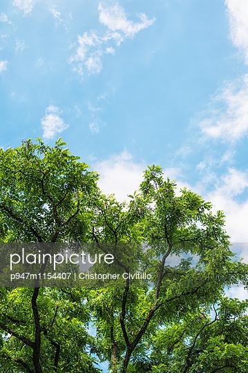 Baum im Sommer - p947m1154407 von Cristopher Civitillo