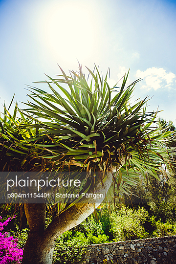 Sommersonne - p904m1154401 von Stefanie Neumann