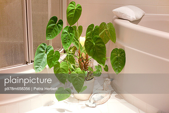 Green plant in the bathroom