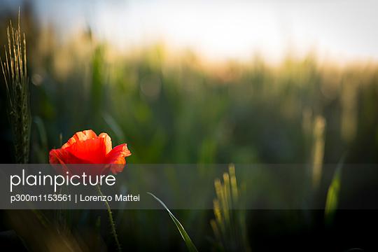 p300m1153561 von Lorenzo Mattei