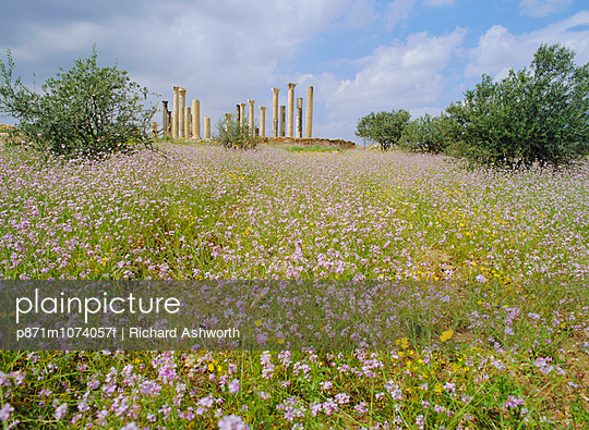 Spring flowers in foreground and columns of the 7th/8th century basilica at ancient Abila, a city of the Roman \'Decapolis\', north of Irbid, Jordan