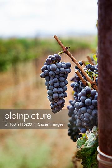 p1166m1152097 von Cavan Images