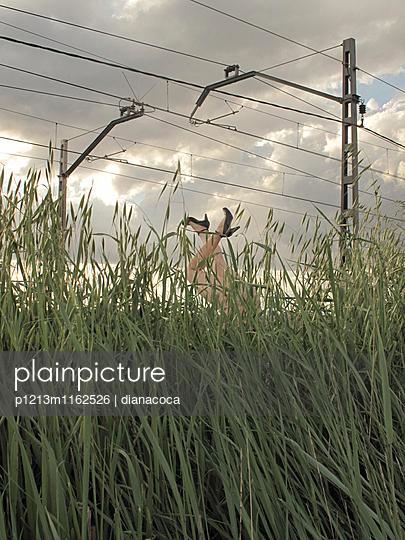 Schaufensterpuppe kopfüber im Gras - p1213m1162526 von dianacoca