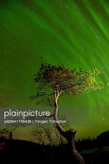 p429m1155438 von Yevgen Timashov