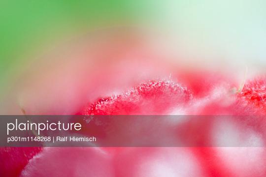 p301m1148268 von Ralf Hiemisch