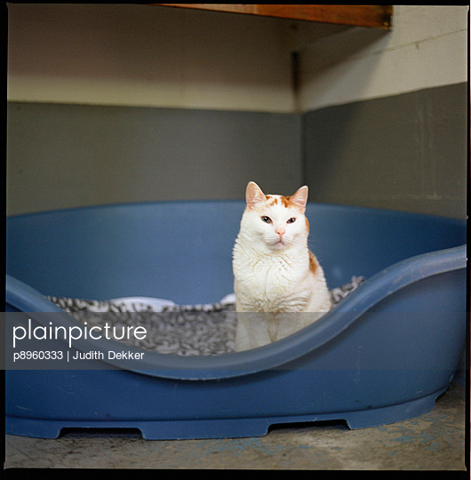 White and red cat sitting in a basket