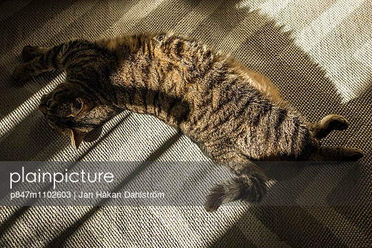 Cat Stretches Out In The Heat Of Sunlight
