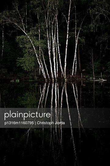 Birken an einem See, Tanna, Thüringen, Deutschland - p1316m1160795 von Christoph Jorda