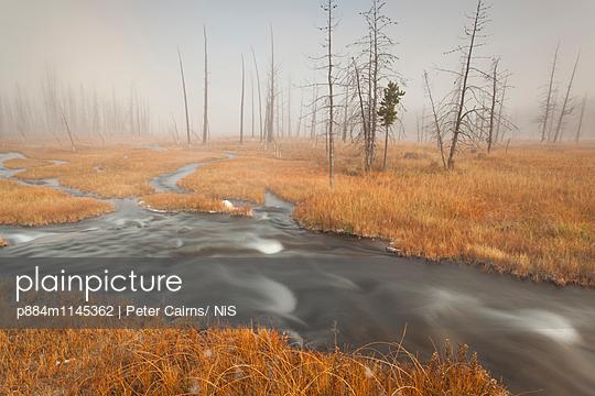 p884m1145362 von Peter Cairns/ NiS