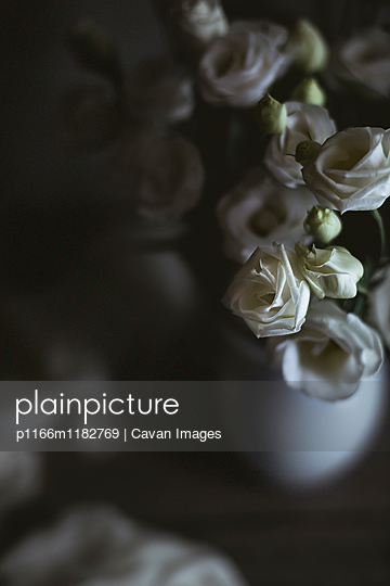 High angle view of white roses in vase