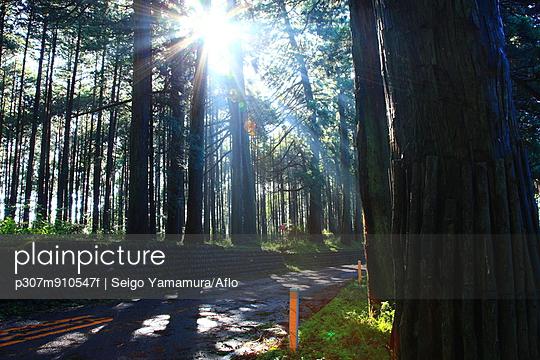 Road and cedar trees in Nikko, Tochigi Prefecture