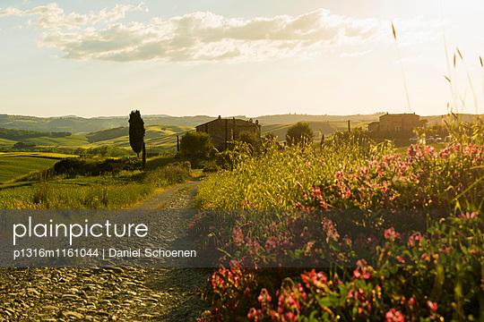 Landschaft bei San Quirico d`Orcia, Val d`Orcia, Provinz Siena, Toskana, Italien, UNESCO Welterbe - p1316m1161044 von Daniel Schoenen