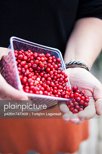 Midsection of man pouring fresh lingonberries from bowl in hand