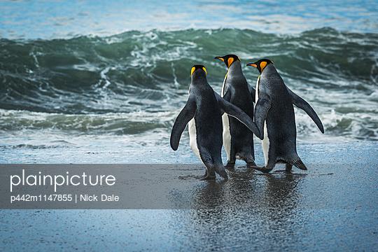 p442m1147855 von Nick Dale