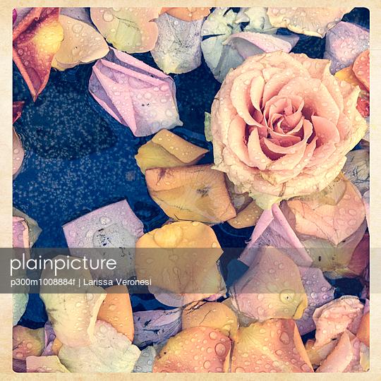 Roses and rose petals