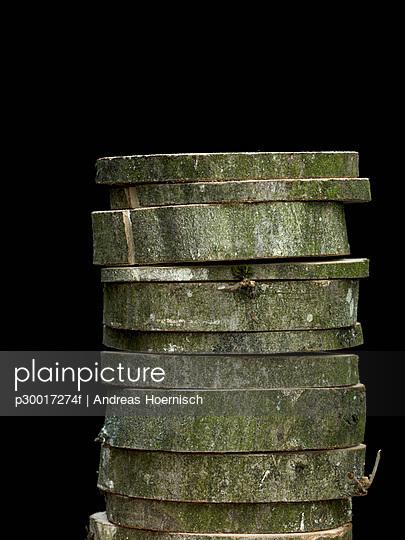 Stack of cut beech tree trunk