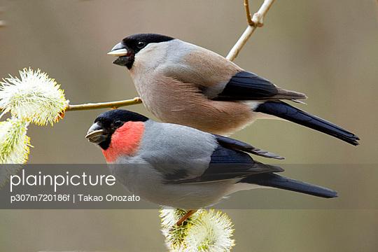 Two wild birds