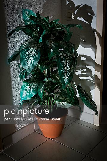 Künstliche Zimmerpflanze - p1149m1183320 von Yvonne Röder