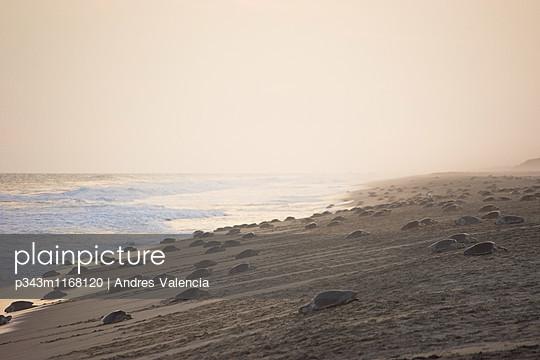 p343m1168120 von Andres Valencia