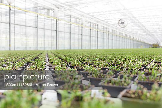 Herbal plants growing in greenhouse