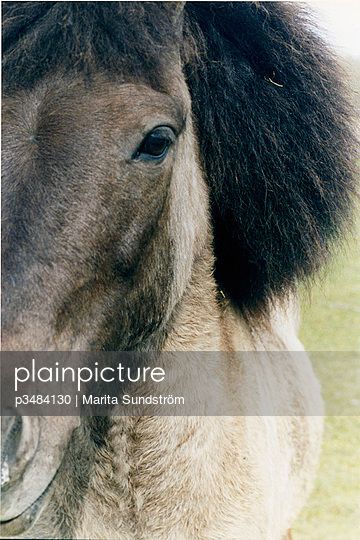 A horse with fluffy mane