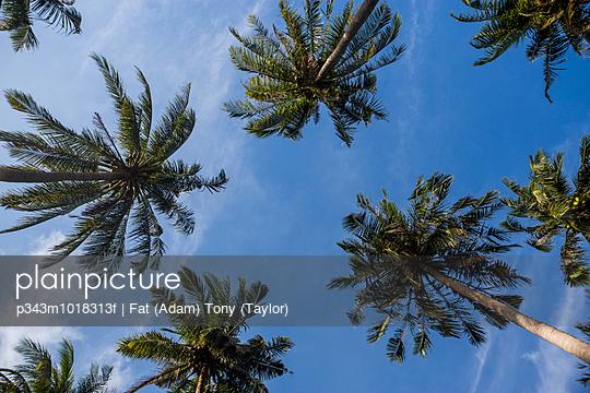 Looking up at palm trees in Tonsai Beach, Krabi, Thailand.