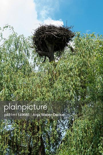 Leeres Storchennest - p451m1149685 von Anja Weber-Decker