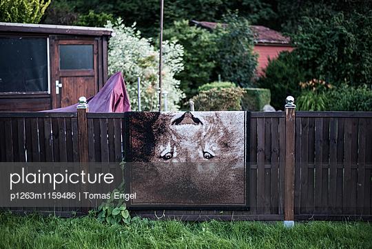 Löwe - p1263m1159486 von Tomas Engel