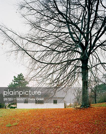 Haus im Bauhausstil im Herbst - p972m1160327 von Felix Odell