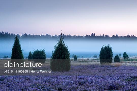 Frühnebel, Lüneburger Heide, Niedersachsen, Deutschland - p1316m1160985 von Heinz Wohner