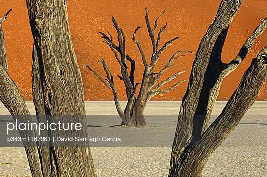 p343m1167961 von David Santiago Garcia