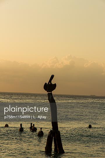 Pelikan auf einem Holzpfosten am Meer - p758m1154859 von L. Ajtay