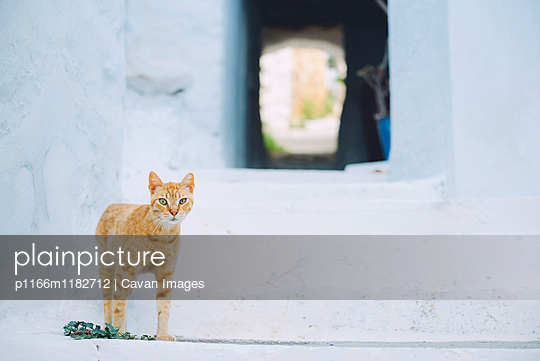 Portrait of ginger cat by white steps