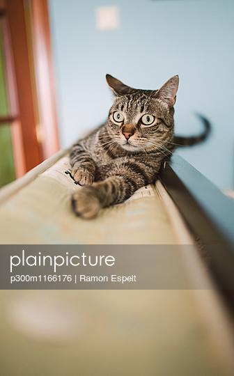 p300m1166176 von Ramon Espelt