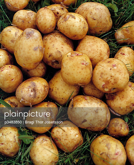Close-up of a heap of raw potatoes