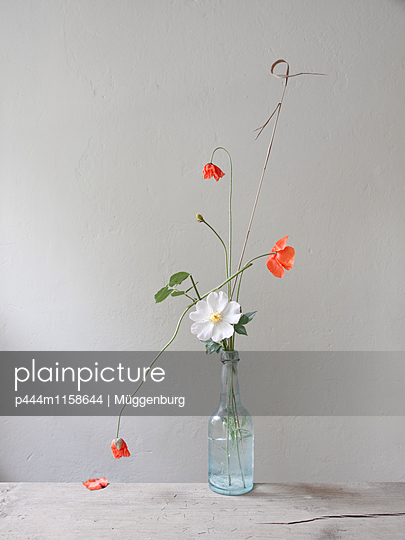 Sommerblumen - p444m1158644 von Müggenburg