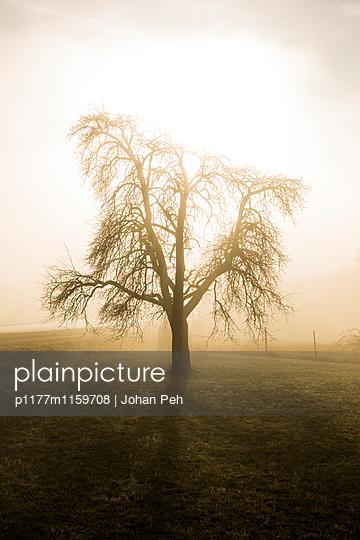 Baum in Nebel - p1177m1159708 von Philip Frowein