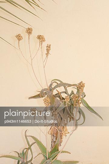 Pflanze - p943m1146653 von Do-It-Studios