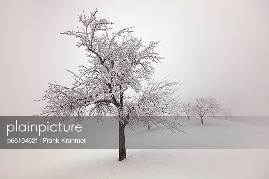 Winter landscape with snow covered fruit tree