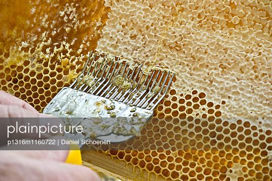 Honigwaben werden entdeckelt, Freiburg im Breisgau, Schwarzwald, Baden-Württemberg, Deutschland - p1316m1160722 von Daniel Schoenen