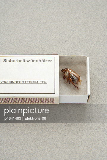 Insect in a box